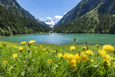 Mountains and lake landscape with flower meadows in early summer. Austria, Tyrol, Stillup Lake, Zillertal