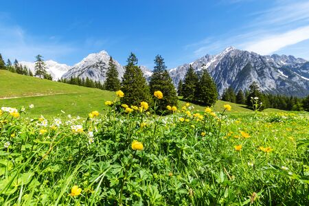Alps view with yellow flowers. Summer mountain landscape