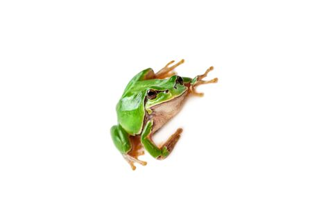 Green frog isolated on white background. Stok Fotoğraf