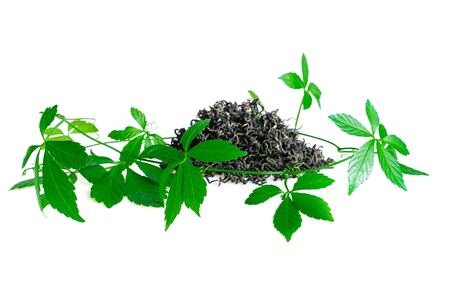 Miracle grass, Southern ginseng, Gynostemma pentaphyllum, Five Leaves Ginseng, Herb of Immortality on White Standard-Bild