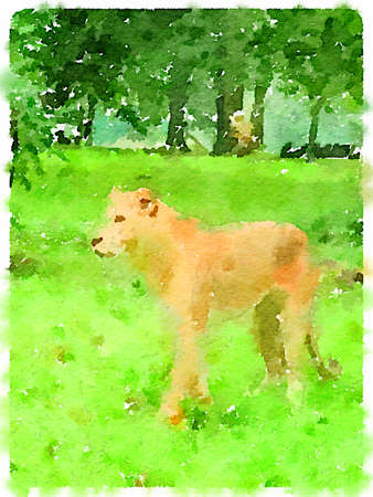 Digital watercolour painting of a lioness walking on the grass. Stok Fotoğraf