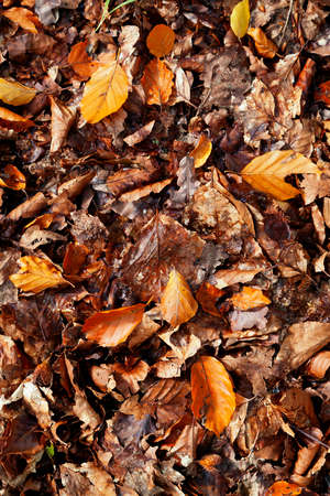 Autumn leaves background. Leaves from a mix of trees and a range of colours from yellow, to brown to orange.
