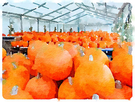 Digital watercolor painting of a large number of pumpkins stored in a greenhouse. Imagens