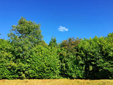 Row of trees on a sunny day with a blue sky and space for text.