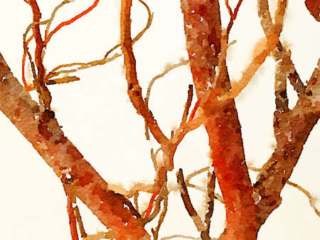 Digital watercolor painting of branches of a tree with a light background. Branches growing in various directions.