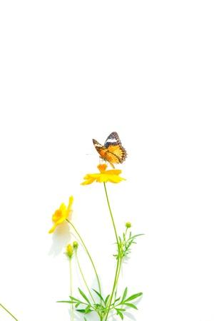 mariposas amarillas: Detalle de coloridas mariposas en flores. Foto de archivo