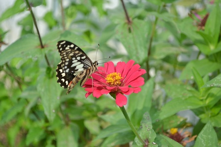 Closeup of colorful butterflies on  flowers. photo