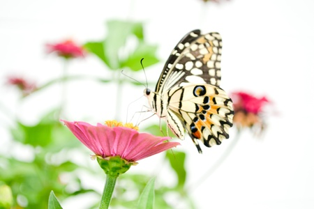 wild life: Closeup of colorful butterflies on  flowers.