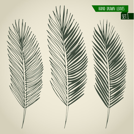 frond: Set of hand drawn tropical palm leaves. Vector illustration. Illustration