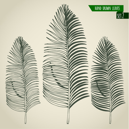 Set of hand drawn tropical palm leaves. Vector illustration. Çizim
