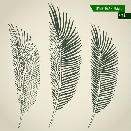 philodendron: Set of hand drawn tropical palm leaves. Vector illustration. Illustration