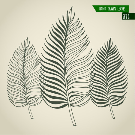 palm leaf: Set of hand drawn tropical palm leaves. Vector illustration. Illustration
