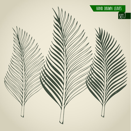 Set of hand drawn tropical palm leaves. Vector illustration. Stock Vector - 40169650