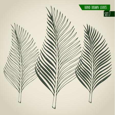 Set of hand drawn tropical palm leaves. Vector illustration. Иллюстрация