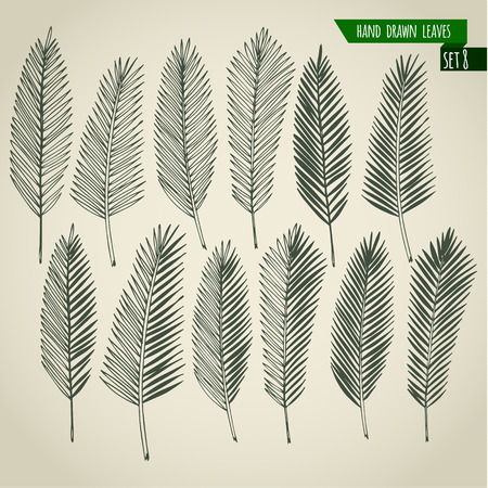 Set of hand drawn tropical palm leaves. Vector illustration. Иллюстрация