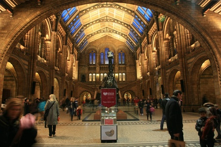 London, UK - January 07, 2011: Inside view of Natural History Museum. This Museum is one of the most favorite museum for children seeing Dinosaur display, visitors looking around dinosaur display.