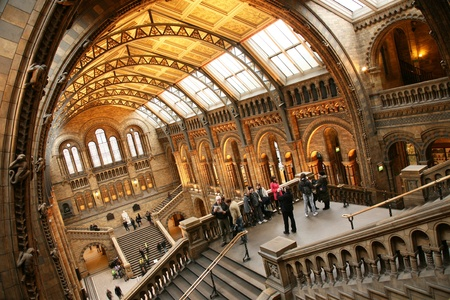 London, UK - January 11, 2011: Inside view of Natural History Museum, Visitors are taking group pictures. This Museum is one of the most favorite museum for children seeing Dinosaur display.