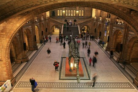 natural history museum: London, UK - January 07, 2011: Inside view of Natural History Museum. This Museum is one of the most favorite museum for children seeing Dinosaur display, visitors looking around dinosaur display.    Editorial