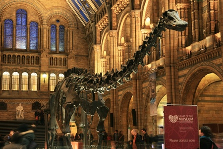 London, UK - January 07, 2011: Inside view of Natural History Museum. This Museum is one of the most favorite museum for children seeing Dinosaur display, visitors looking around dinosaur display.    Stock Photo - 10274132