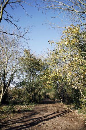 Public walk path, near Richmond, along the River Thames photo