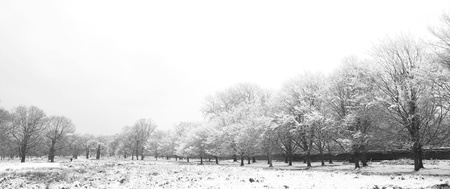 Winter landscape of Richmond Park, it is the largest park of the royal parks in London and almost three times bigger than New York photo