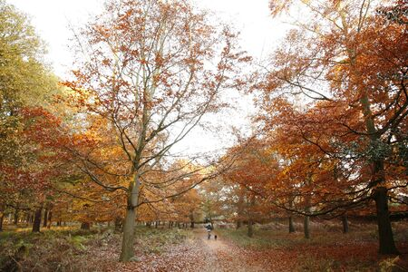 Colorful London Autumn, Richmond Park, November