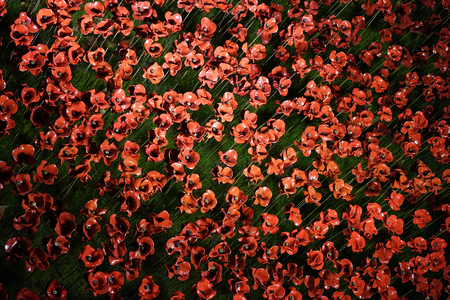 armistice: Remembrance day display, wooden crosses with poppies, Westminster Abbey Stock Photo