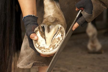 Hoof care, blacksmith, farrier