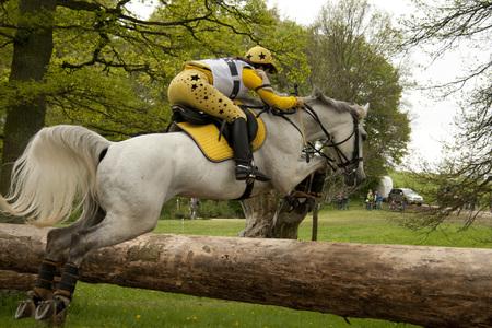 springpaard: Jumping paard Redactioneel