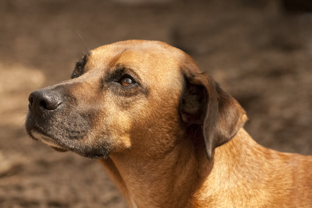 gaze: jachthond met zachte blik