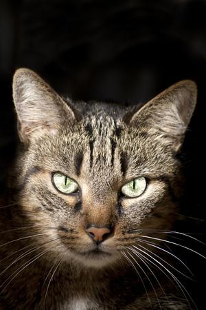 eyecatcher: bright green cat eyes