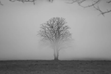 lonely tree in fog black and white
