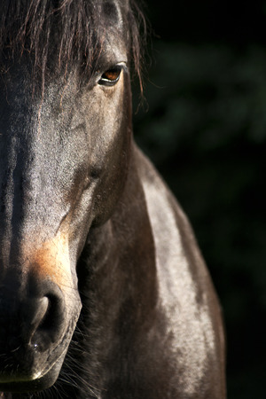 Horse face close up Stock Photo