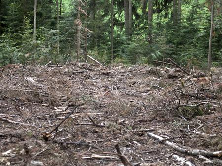 cut off saw: deforest destroyed wood