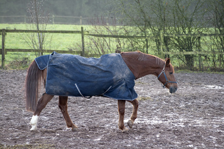 blanket horse: Horse with rain blanket for cold weather Stock Photo