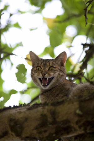 meow: cat high up in tree meow