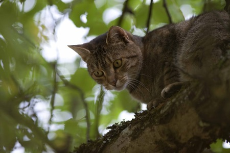 look down: cat high up in tree look down Stock Photo