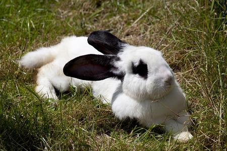 fondo para bebe: Conejito conejo yac�a en el c�sped Foto de archivo