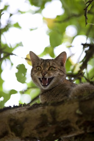 high up: cat climb high up in tree hunting Stock Photo