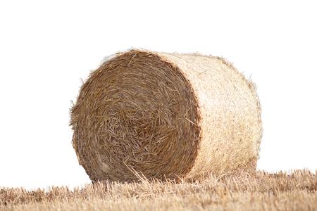 옥수수 밭에 스트로 베일