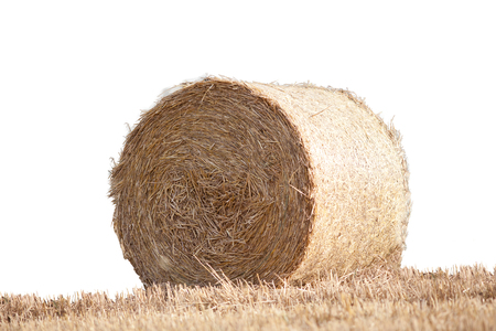 Straw bale on cornfield