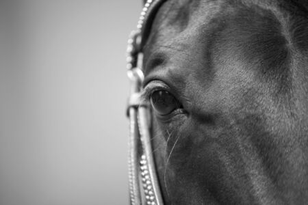 Horse eye close up Black and white