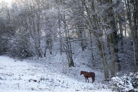 Horse in winter scene outside on snowy meadow