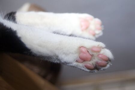 Cat paw. white paws underside from kitty