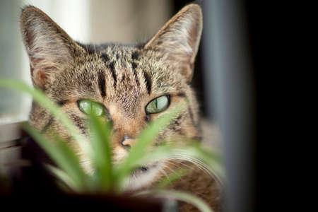indoor cat hiding behind a green plant