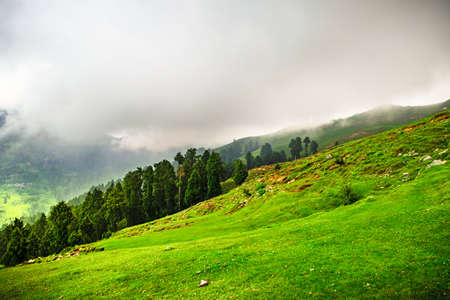 View of alpine meadows & coniferous enroute to Prashar Lake trekk trail. It is located at a height of 2730 m above sea level surrounded by lesser himalayas peaks near Mandi, Himachal Pradesh, India.