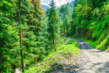 View enroute to Prashar Lake trekk trail. It is located at a height of 2730 m above sea level surrounded by lesser himalayas peaks near Mandi, Himachal Pradesh, India.