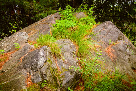 Phyllite is a type of foliated metamorphic rock created from slate that is further metamorphosed so that very fine grained white mica achieves a preferred orientation.