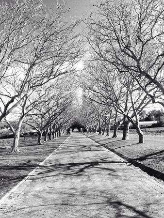 white: Paved road surrounded by trees on a cold winters day in black and white