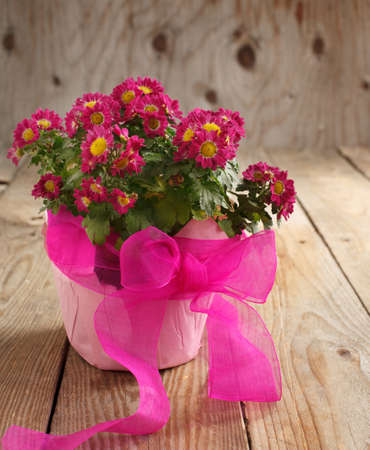 Pink Flowers in the Pot on Wooden Table photo